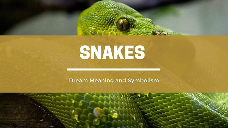 Snakes dream meaning