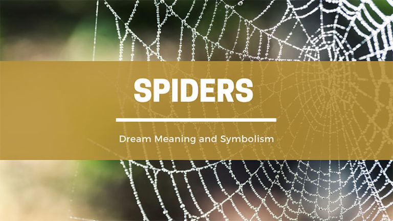 Spider Dream Meaning and Symbolism