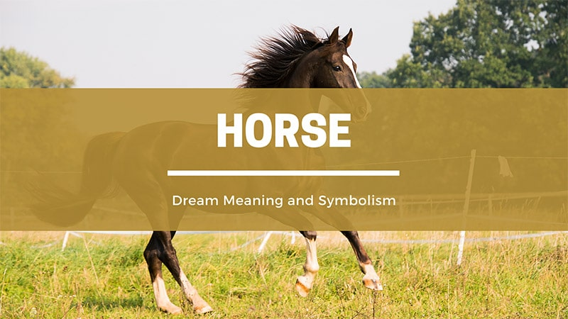 horse dream meaning