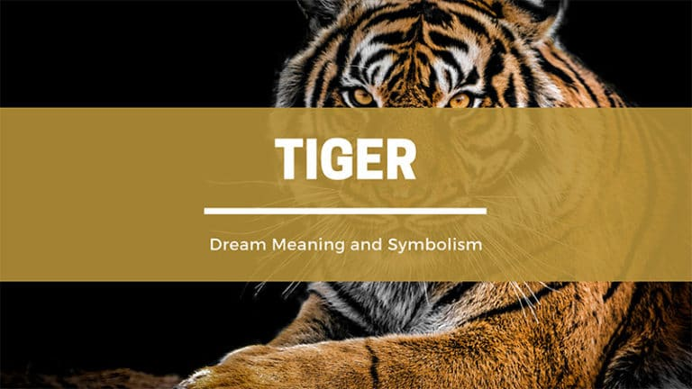Tiger Dream Symbolism and Spiritual Meaning