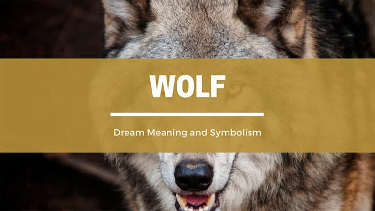 Wolf Dream Meaning and Symbolism